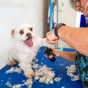 dog grooming salons