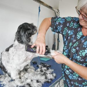 perth northern suburbs dog grooming